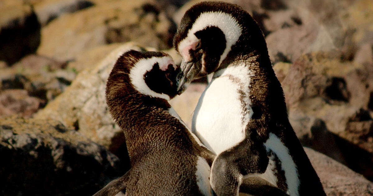 10 Romantic Date Ideas In Cape Town